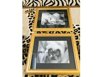 ATHENA CAT KITTEN DECORATIVE PICTURES X2 IN GOLD GILT FRAMES