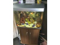 Fish tank and roughly 20 fish for sale