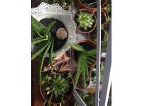 Various desert / mystery / succulent plants