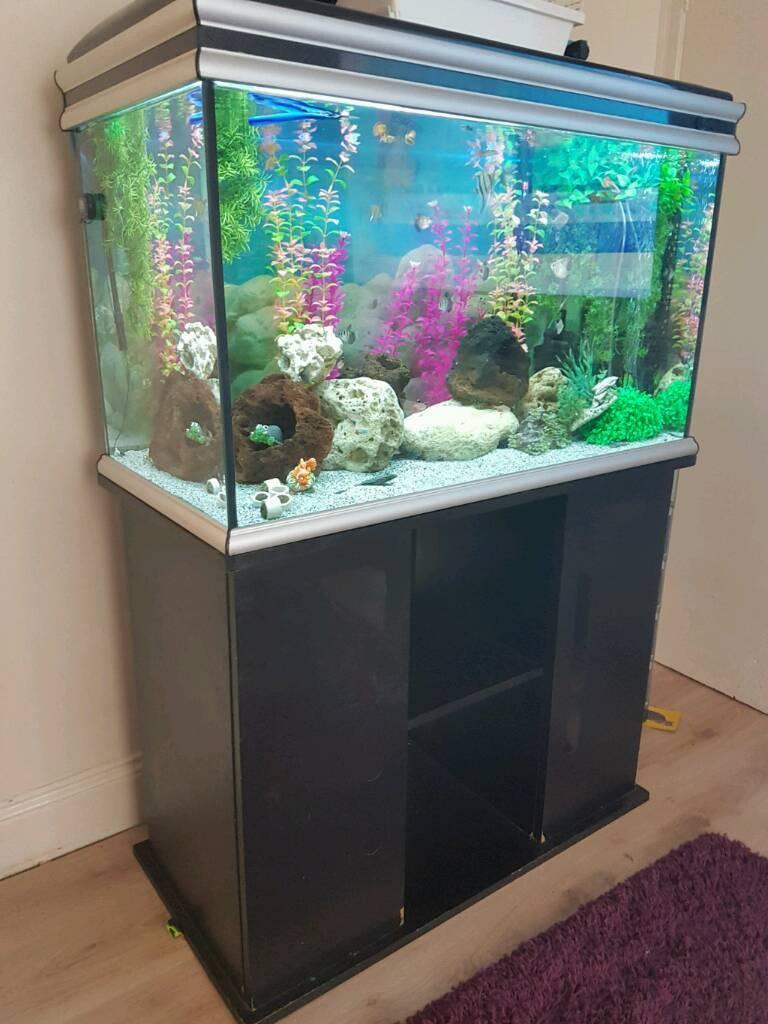 Aquarium fish tank setup - Fish Tank Setup