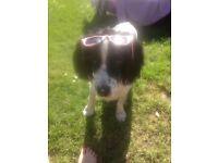 Local friendly dog groomer