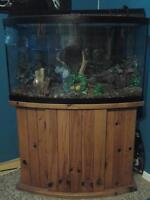 Beautiful 46 gallon Bowfront aqarium and all accesories