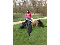 Topo's Dog Walking in Milton Keynes, Olney, Newport Pagnell Other pet care services available