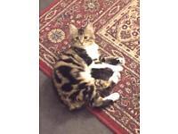Friendly loving kitten (SOLD)