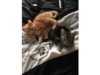 Two lovely kittens