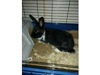 Beautiful rabbit for sale