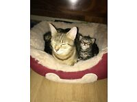 2 bengal kittens ready to go now wormed and de fleshed