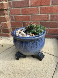 Blue Onion shaped plant pot with pink perennial geranium