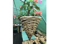 Pre-planted Hanging Basket