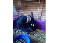 Male mised breed bunny seeks loving home