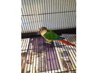 Lost Parrot ... please help!