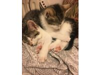 3 BEAUTIFUL KITTENS ready for their new home