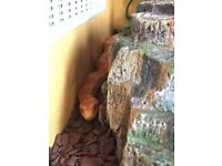 2 snakes with vivarium and accessories