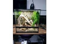 Ball python and new vivarium tank