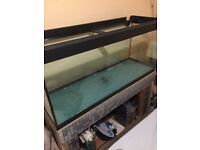Fluval 240 L tank converted to marine