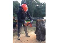 Chainsaw carving in stumps or logs for more practice