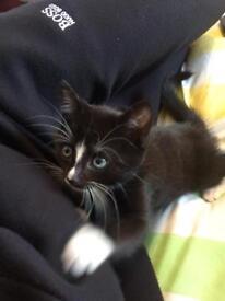 Lovely kitten forsale