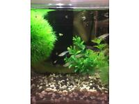 Guppy Fry for sale Various ages male and female all healthy