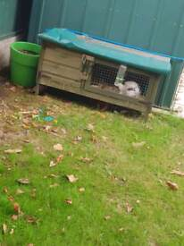 Rabbit and hutch with accessories