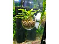 New glass pot with plants for fish tank