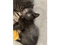 😻TWO BLACK KITTENS 😻