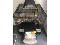 Bird cage with accessories budgie etc