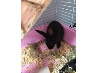 x2 rabbits 2 floor cage and food bedding etc.