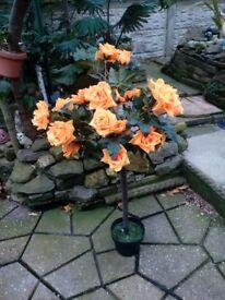 Orange artificial. Standard. Rose forsale