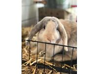 Lovely boy rabbit looking for a good home