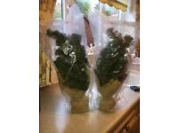 Pair of small artificial Christmas trees *Brand New In Packaging* £9