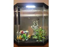 Fish, tank and ornaments for sale