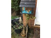 Painted bird table with a pot of ivy growing up it