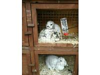 17 rabbits need new homes