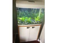 Tropical fish tank - AquaStyle 620