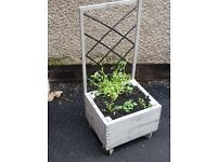 *HALF PRICE LAST CHANCE* Black&grey trellis planter flowers included