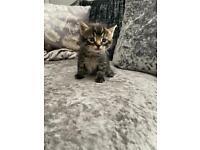 Beautiful fluffy kittens 😍