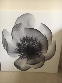 IKEA poppy x-ray print canvas picture