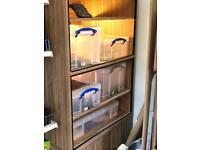 Reptile RuB Cabinet
