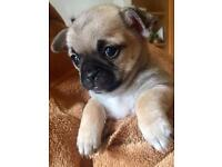 *** STUNNING PUPPIES FOR SALE ***
