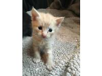 Ginger kitten!
