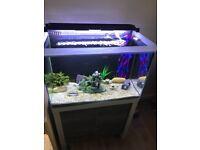 Stylish Fish Tank