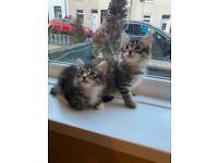 Lovely kittens 🐈⬛
