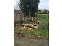 VERY VERY DRY FIREWOOD -APPROXIMATELY 10+ LOGS CHOPPED UP TO 1 - 1/2 FOOT TO 2FOOT SIZES