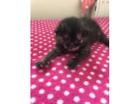 Cute kittens for loving homes!