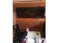 3ft Fish tank x 2ft wide and 2ft high complete cabinet nice piece of furniture