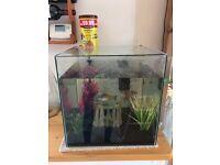 1 Angelfish & 1 Dwarf Gourami + Aquarium Kit