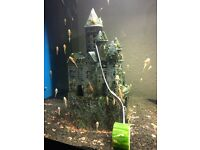 Pleco fish for sale £2.00 only big sale gonig on now 6 fishs only £10.00