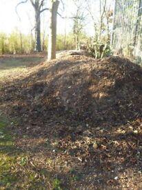 Large piles of loose wood chip cypress pine