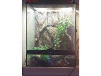 2 x crested geckos