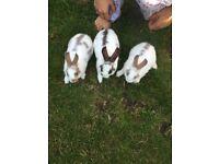 Baby rabbits. Bunnies